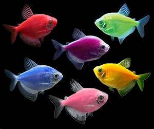 GloFish® – Future Now Mini Mart