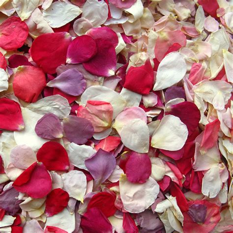 pre mixed rainbow small natural rose petals real flower