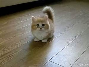 12 Kitten Gifs to Brighten Up Your Day - Blog by ...