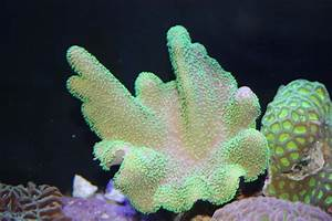 Absolutely Fish Photo Gallery - Soft Corals