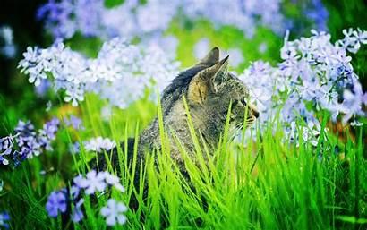 Grass Cat Garden Animals Flowers Desktop Geographic