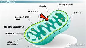 Atp Synthase  Definition  Structure  U0026 Function