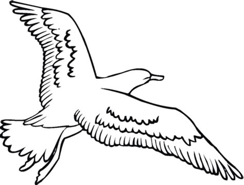 seagull  flying coloring page  printable coloring pages