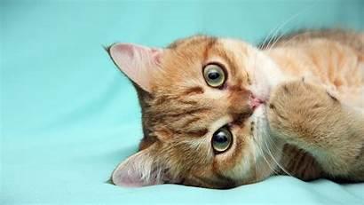 Desktop Kitten Cats Kittens Wallpapers Bernie Graddy