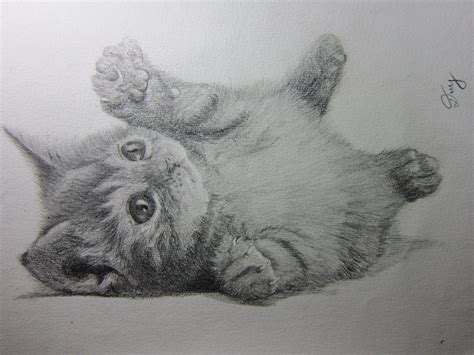 drawings of cats drawing of cat by duyleto on deviantart