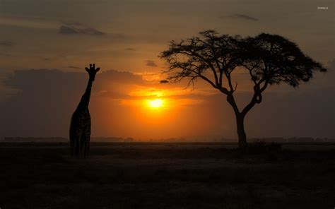 Animal Silhouette Wallpaper - giraffe silhouette wallpaper animal wallpapers 21333