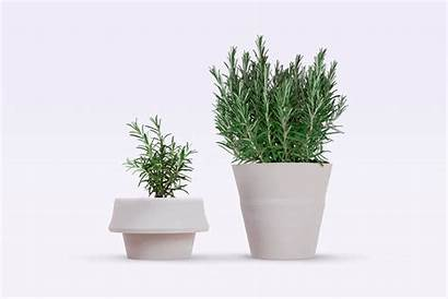 Pot Vaso Plant Fold Piante Pizzolorusso Esterno