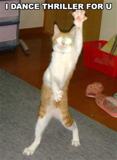 funny cat picture funny cats pictures funny kitty cat