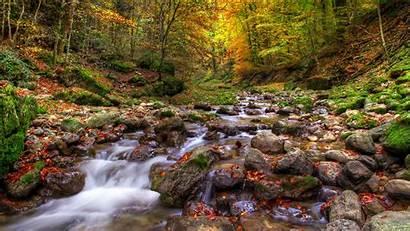 Stream Background Autumn Scene Woodland Forest Wallpapers