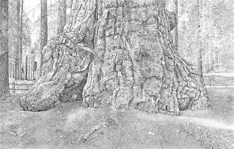 trees  stick drawings  behance