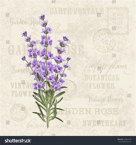 Vintage Postcard Template Vintage Backgrounds Lavender Card Vintage Postcard Background Stock