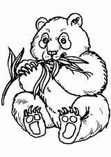Panda sketch template