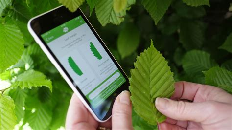 Identify Trees With Our Tree ID app - Woodland Trust ...