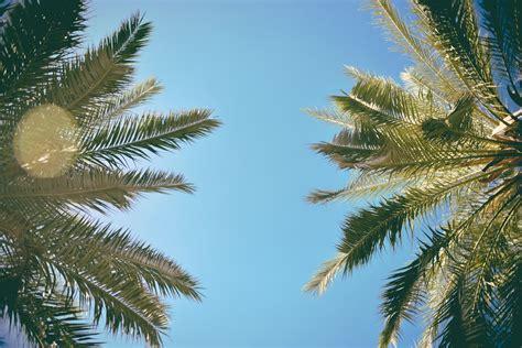 picallscom cup palms  ed gregory