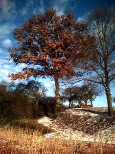 Baum Mit Roten Blättern : 060209 160259 baum ~ Eleganceandgraceweddings.com Haus und Dekorationen