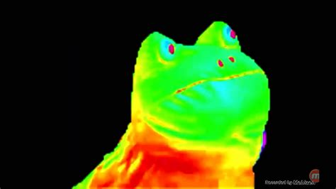 Frog Meme - rainbow frog 1 hour youtube