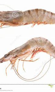 Fresh tiger prawn stock photo. Image of horizontal, fish ...