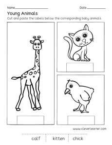 animals  young  worksheet  worksheet