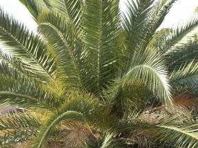 Pictures of What Is Palm Oil