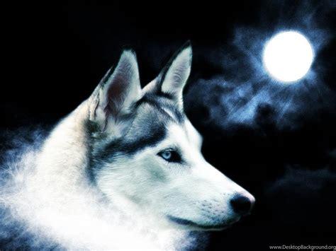 animal wallpaper wolf wild animal desktop background