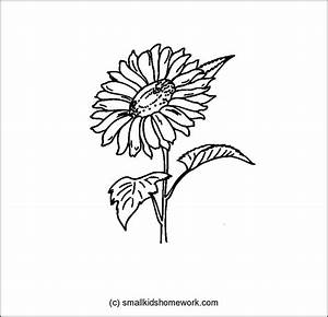 Image Gallery sunflower outlines