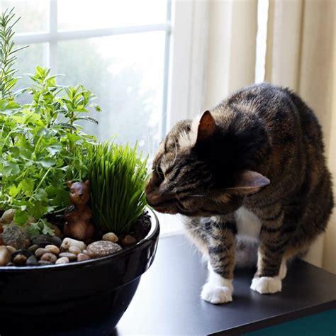 17 best ideas about cat garden on cat grass