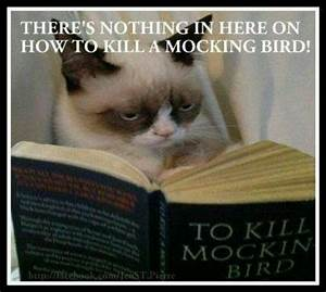 Reading With Cats Funny Quotes. QuotesGram