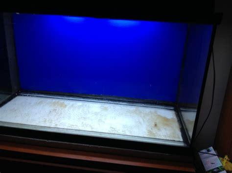 jual baground polos biru hitam aquarium  lapak hoki
