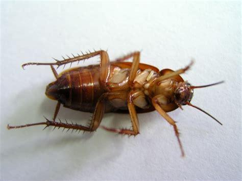 absurd creature   week  wasp  enslaves