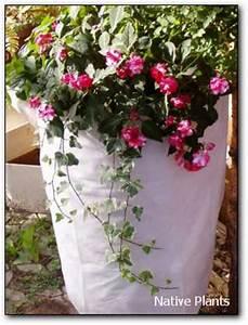 Immergrüne Winterharte Kübelpflanzen : 1 x 1 der topfpflanzen native plants gartenblog ~ Markanthonyermac.com Haus und Dekorationen