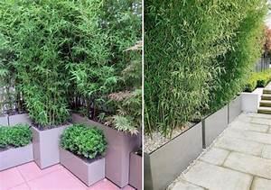 les 25 meilleures idees concernant brise vue sur pinterest With amenagement terrasse exterieure appartement 5 bambou en pot brise vue naturel et deco sur la terrasse