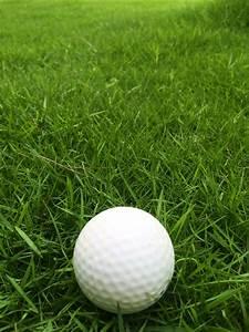 Free Images   Grass  Lawn  Recreation  Green  Garden  Sports Equipment  Golf Ball  Golf