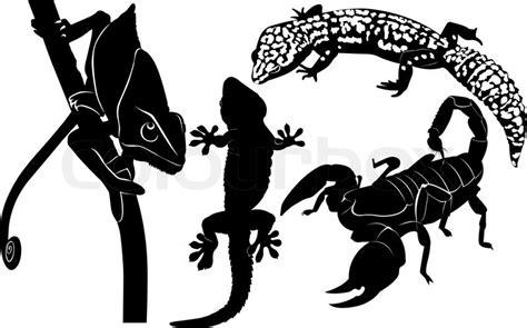 scorpion gecko chameleon stock vector colourbox