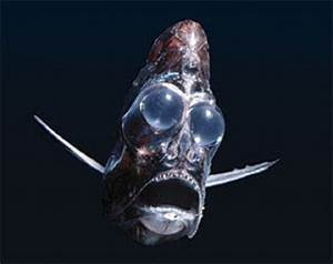 Six Weird Fish With Even Stranger Teeth Featured Creature