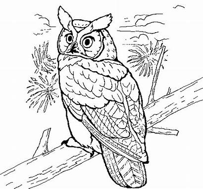 Owl Coloring Horned Pages Owls Printable Coloringcrew