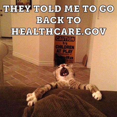 Pet Insurance Meme - literally 51 cat memes to take over your screen and day