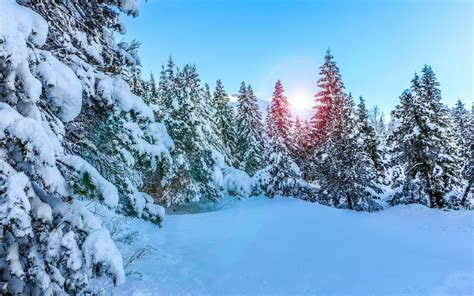 Hd Winter Photo by Wallpaper Pine Trees Snow Winter Day Hd Nature