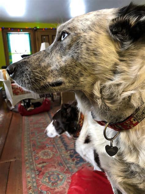 dogs three