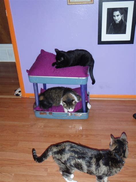reclaimed suitcase chair cat bunkbed     pet