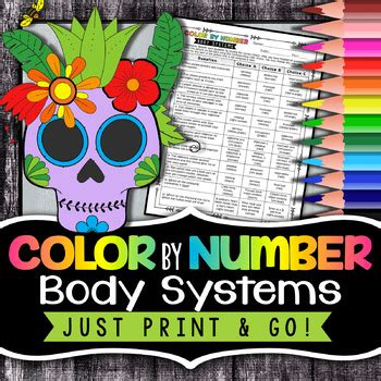 human body systems color  number science color