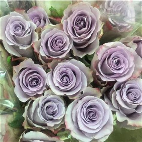 pink and grey nursery earl grey roses x 20 wholesale flowers florist
