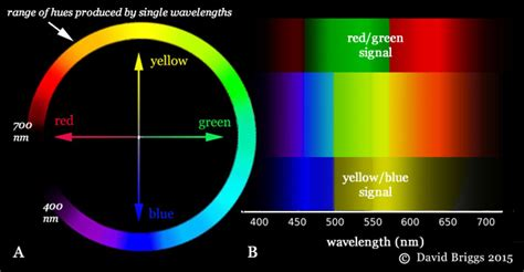 reddit of color why are different wavelengths perceived as different