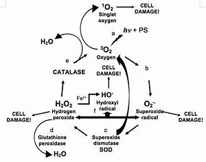 Why Is Catalase So Fast  A Preliminary Network Hypothesis