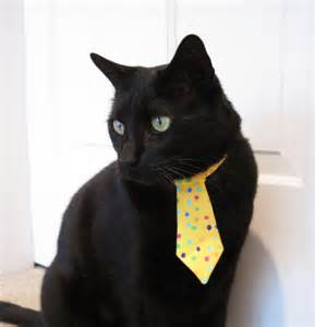 cat tie cat tie confetti cat