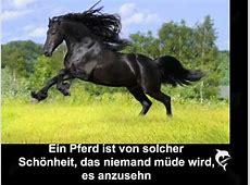 Pferde Gedichte YouTube