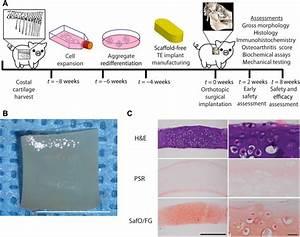 Tissue Engineering Toward Temporomandibular Joint Disc