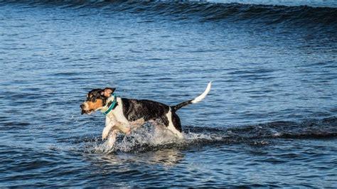 kisah heroik  dilakukan anjing jakarta dog lovers
