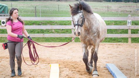 bodenarbeit pferdeworld