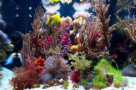 Zia Reefer's Gorgonian And Soft Coral Tank Is Truly One Of