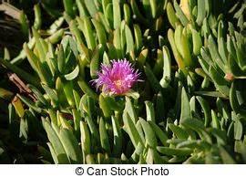 Pflanze Lila Blätter : lila pflanze gr ne bl tter zwischen pflanze normal lila bl tter ones dunkles gr n ~ Eleganceandgraceweddings.com Haus und Dekorationen
